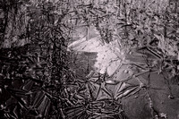 Ice Crystals on Puddle, 1993.