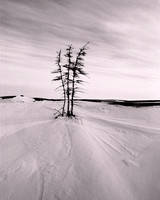 Spruce Clump, Great Slave Lake. 1995.